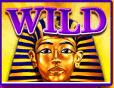 Wild sphinx